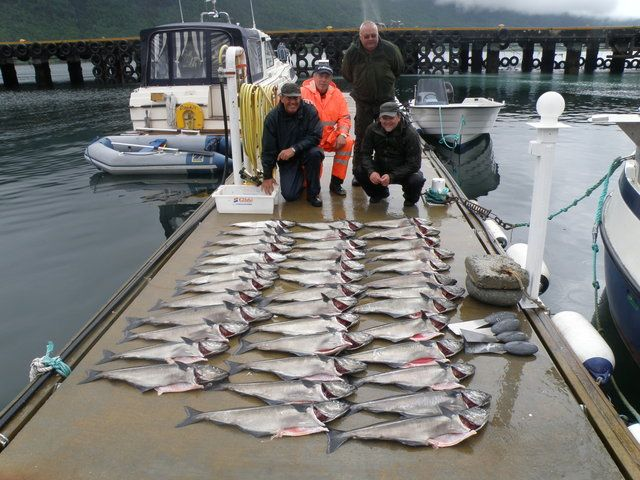 fisk smahola innfjorden